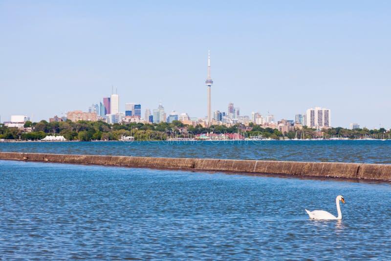 Panorama del cigno, del lago Ontario e di Toronto fotografia stock libera da diritti