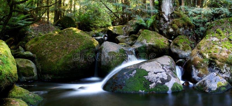 Panorama del fiume della foresta pluviale fotografie stock libere da diritti