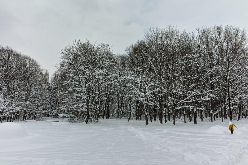 Panorama del invierno con los árboles nevados en South Park en la ciudad de Sofía imagen de archivo libre de regalías