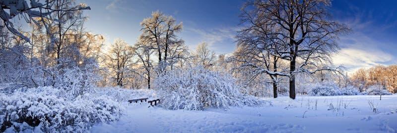Panorama del invierno de un parque foto de archivo libre de regalías