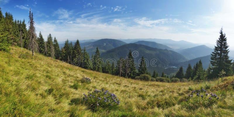 Panorama del lago Synevir. immagini stock libere da diritti