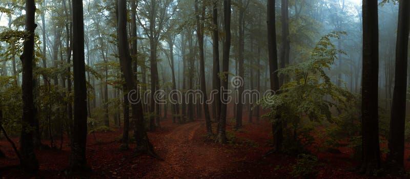 Panorama del legno di sguardo spettrale di fiaba nebbiosa della foresta dentro di mattina immagini stock libere da diritti