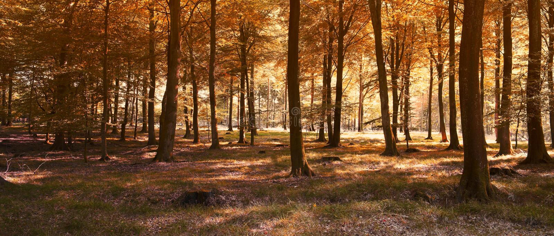 Panorama del otoño fotografía de archivo libre de regalías
