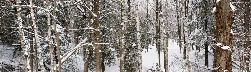 Panorama del paesaggio della foresta di inverno immagine stock