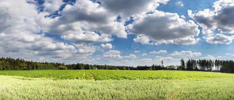 Panorama del paesaggio di estate con i campi verdi ed il cielo nuvoloso fotografia stock libera da diritti