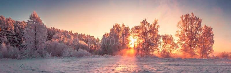 Panorama del paisaje de la naturaleza del invierno en la salida del sol La Navidad foto de archivo
