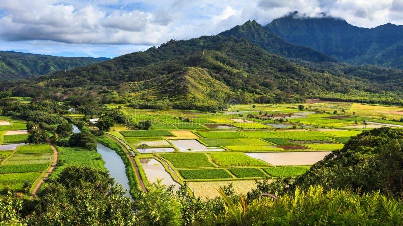 Panorama del valle de Hanalei fotografía de archivo libre de regalías