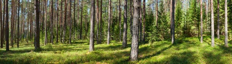 Panorama della foresta di estate fotografie stock