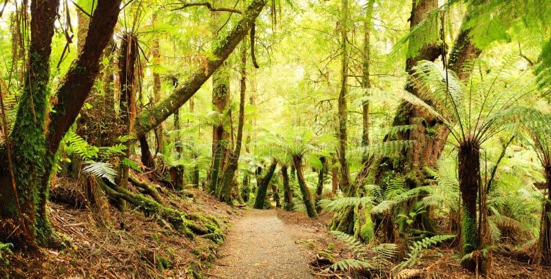 Panorama della foresta pluviale immagine stock