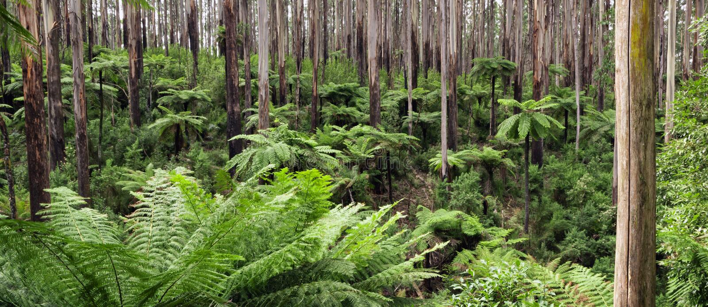Panorama della foresta pluviale fotografie stock