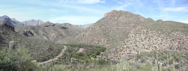 Panorama della montagna di Tucson immagine stock