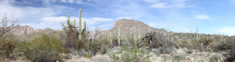 Panorama della montagna di Tucson fotografia stock