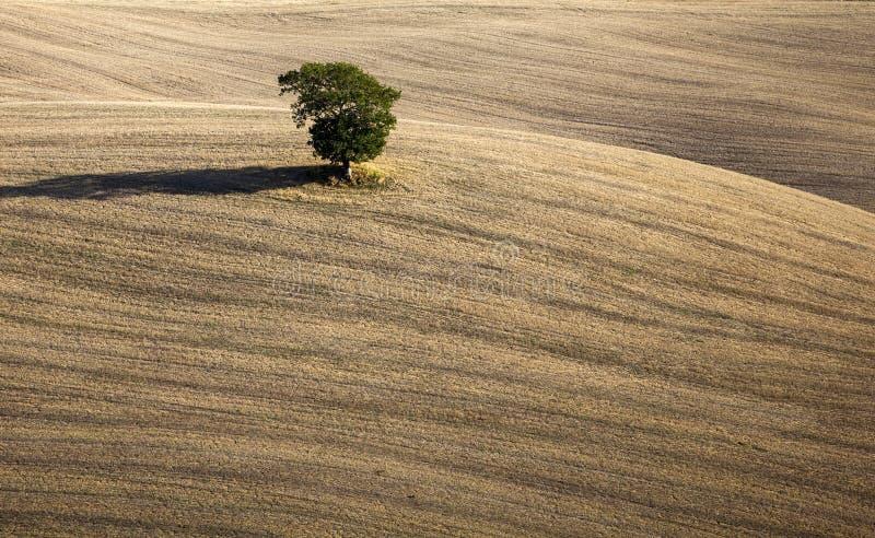 Panorama della Toscana - paesaggio, colline e prato, Toscana - Italia immagine stock libera da diritti