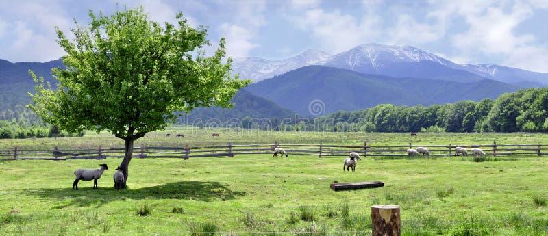 Panorama delle montagne di Fagaras immagini stock libere da diritti