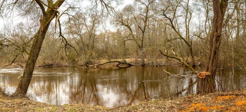 panorama Den ` s fjädrar Det höga vattnet på floden royaltyfri bild