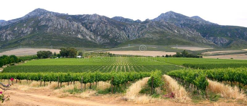 Panorama der Berge und des Weinbergs lizenzfreie stockfotos