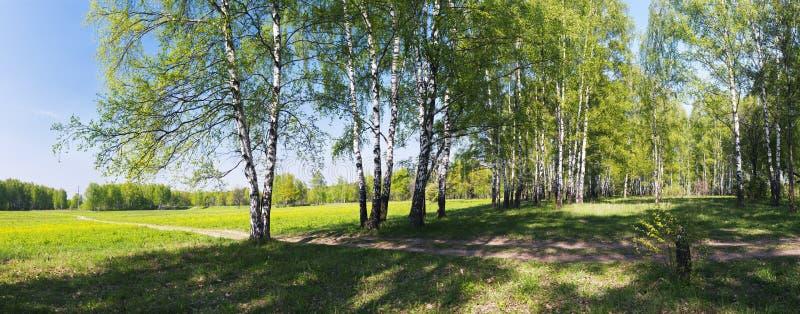 Panorama der Birkengasse stockbild