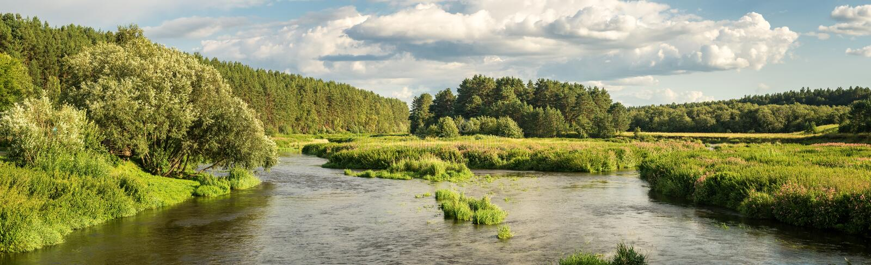 Panorama der Sommerlandschaft auf den Banken des Ural-Flusses mit Wald, Russland stockbilder