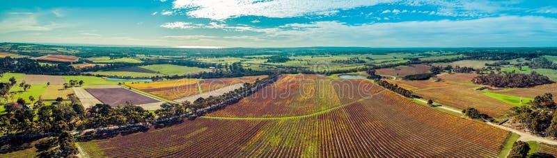 Panorama des enormen Weinbergs und der l?ndlichen Landschaft stockbilder