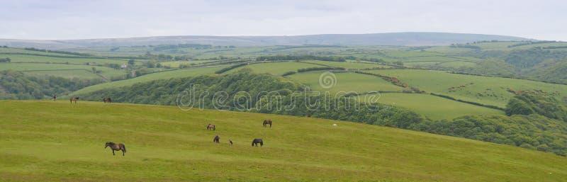 Panorama des Feldes in Cornwall, England lizenzfreies stockfoto