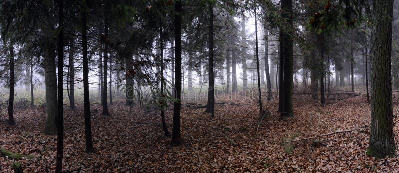 Panorama des gezierten Waldes stockbild