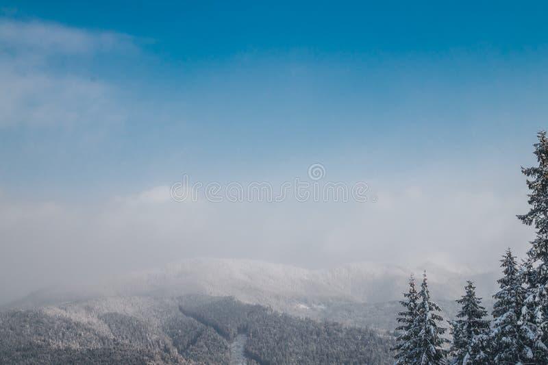 Panorama des montagnes carpathiennes Milou et sapins de crête et grands boisés image libre de droits