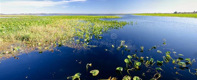 Panorama des protections de lis sur un lac d'eau douce, la Floride photo stock