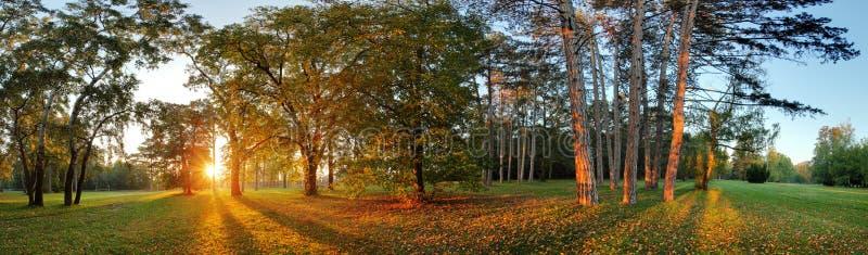 Panorama des Sommers - Herbstbaum in Forest Park stockbilder
