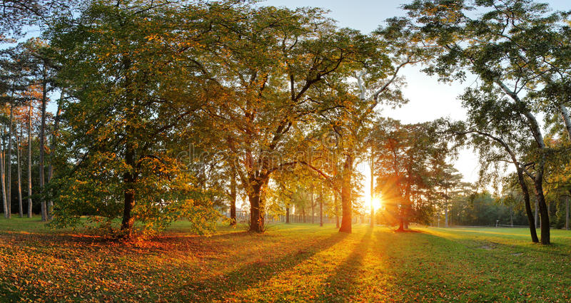 Panorama des Sommers - Herbstbaum in Forest Park stockfoto