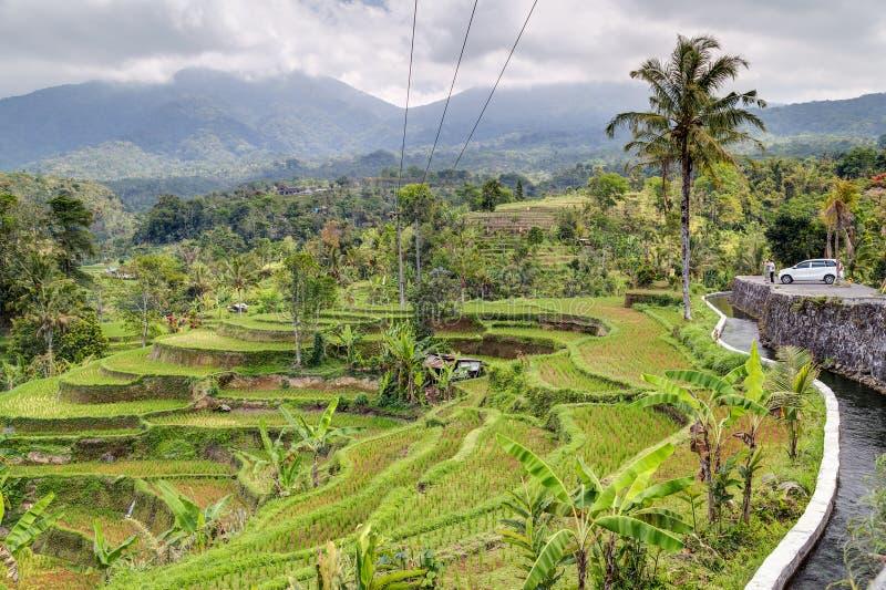 Panorama des terrasses de riz dans Bali avec des montagnes à l'arrière-plan photos stock