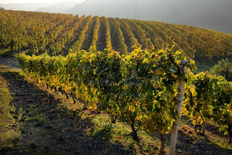 Panorama des vignobles d'automne photos stock