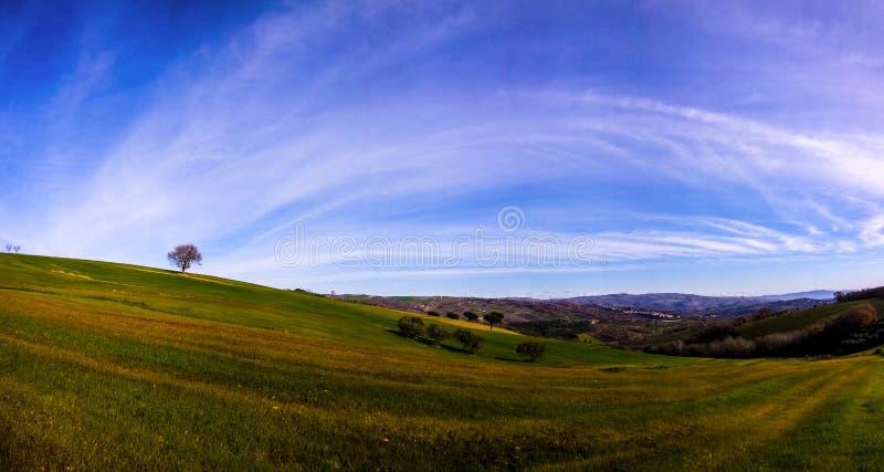Panorama di Albero fotografie stock libere da diritti