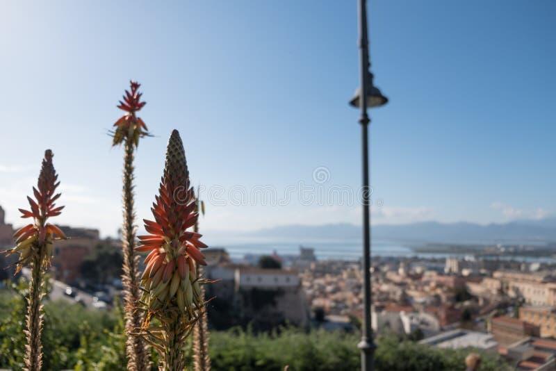 Panorama di Cagliari con aloe Vera Plant e cielo blu - vista dal castello la vecchia città - la Sardegna fotografia stock libera da diritti