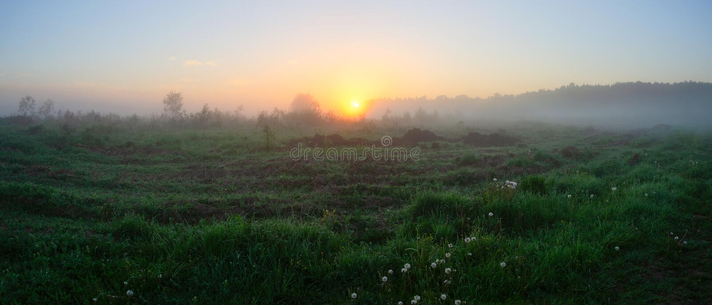 Panorama di estate del prato nebbioso ad alba fotografie stock libere da diritti