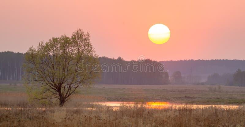 Panorama di uguagliare paesaggio con un albero vicino al fiume, Russia, Ural fotografia stock