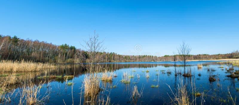 Panorama di un lago della foresta fotografie stock
