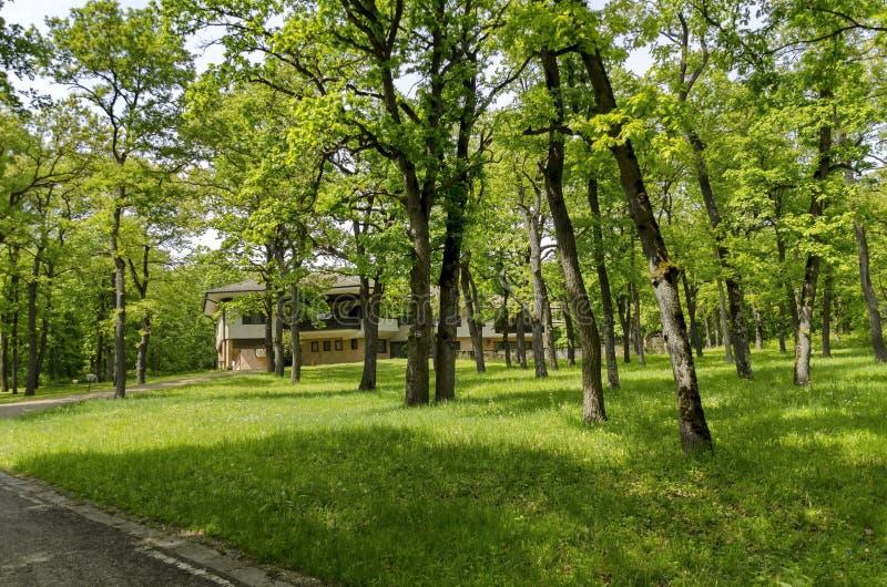Panorama di un percorso attraverso una foresta verde fertile di estate immagini stock libere da diritti