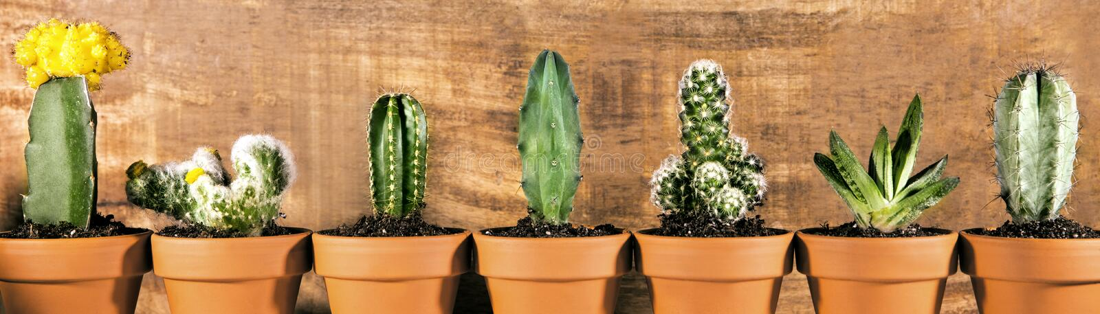 Panorama, different sorts of cactus plants in front of wooden background, potted royalty free stock images