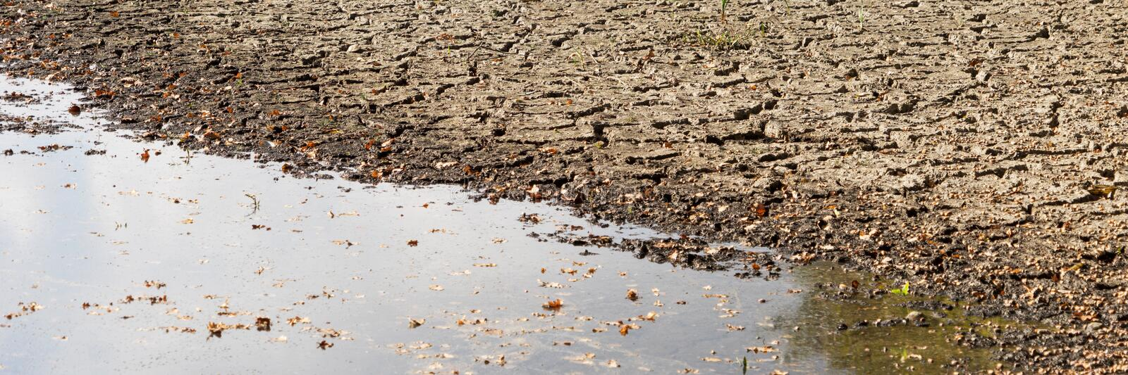 Panorama of diminishing water and drought in the pond stock photos