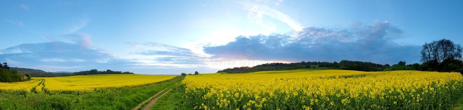 Panorama do campo do Rapeseed foto de stock royalty free