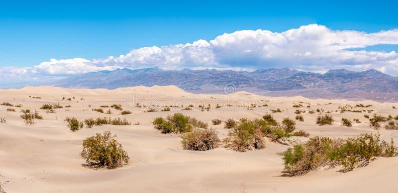 Panorama do Mesquite liso - dunas de areia fotografia de stock