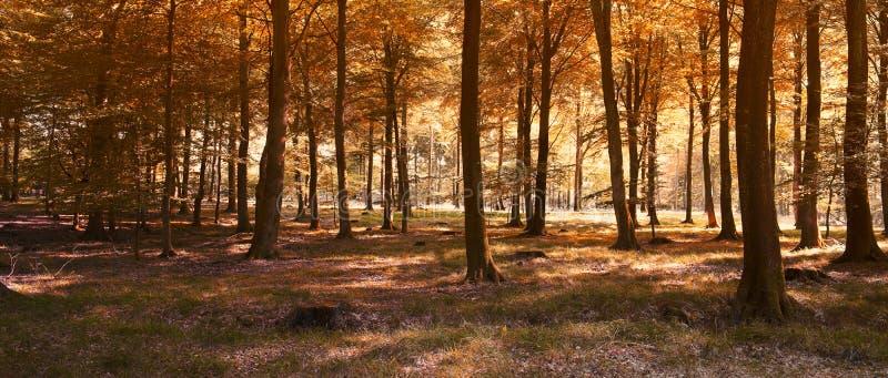 Panorama do outono fotografia de stock royalty free