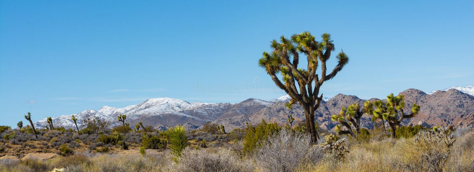 Panorama do parque de Joshua Tree National fotografia de stock royalty free