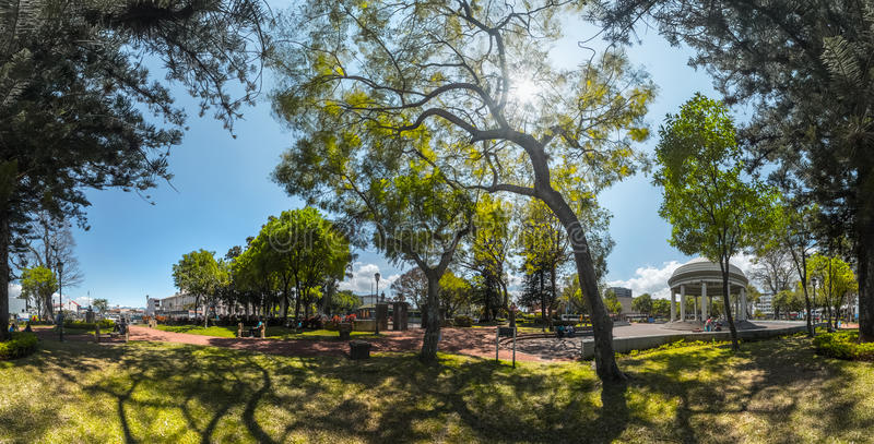 Panorama do parque verde foto de stock