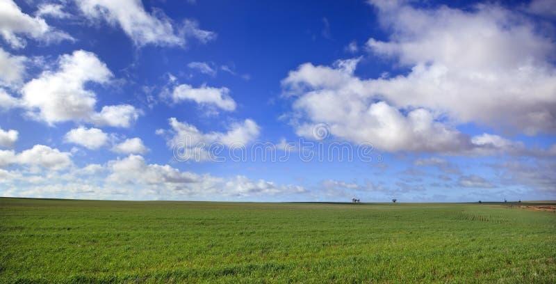 Panorama do prado imagem de stock