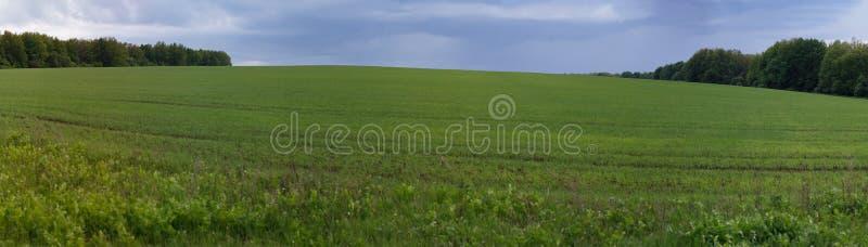 Panorama do prado da mola com nuvens de tempestade fotografia de stock