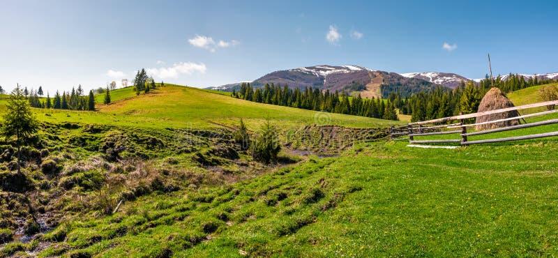 Panorama do prado gramíneo da área rural imagens de stock royalty free