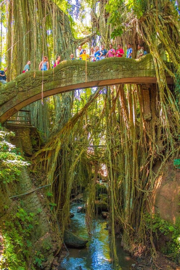 Panorama do rio da floresta do macaco de Ubud foto de stock