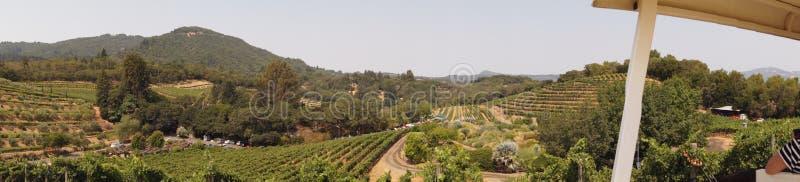 Panorama do vinhedo imagem de stock