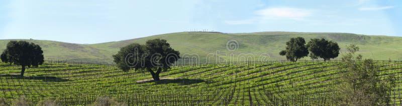 Panorama dormant de vignes au printemps photos libres de droits